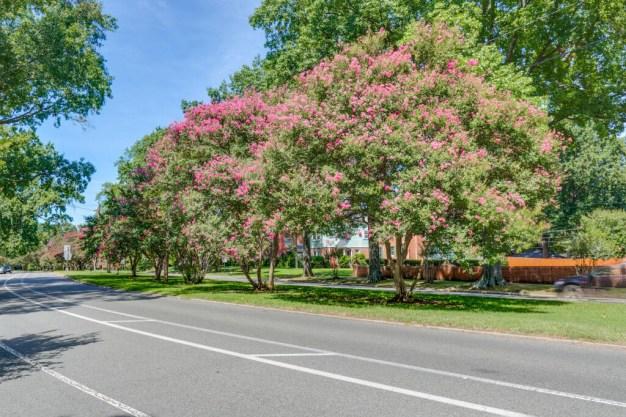 neighborhood street in sherwood park