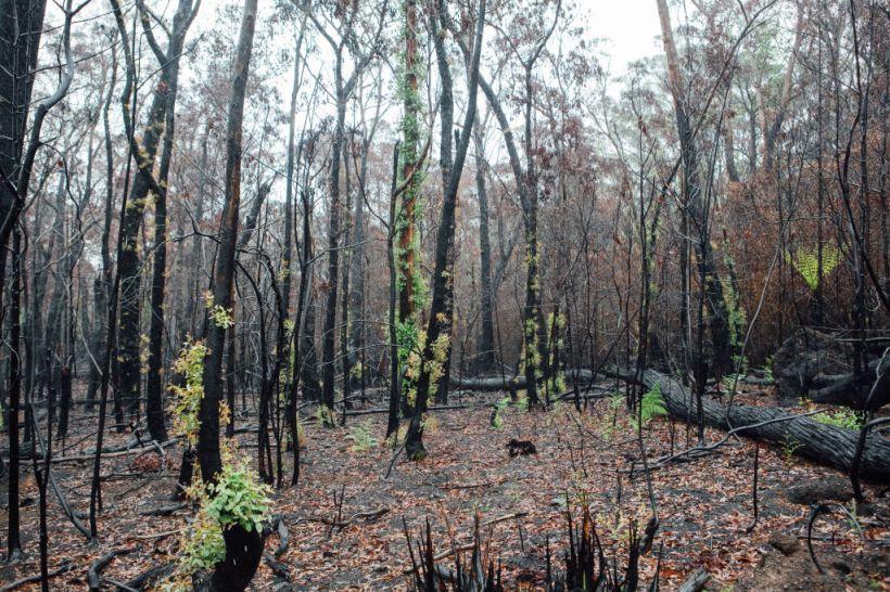 Domain_Bushfires_-_Blue_Mountains_14_hek1qq