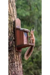 Red squirrel on a feeding box greetings card linking to Etsy store