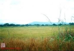 guinea grasslands