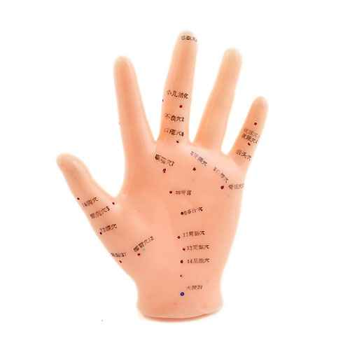 Hand Acupuncture Model