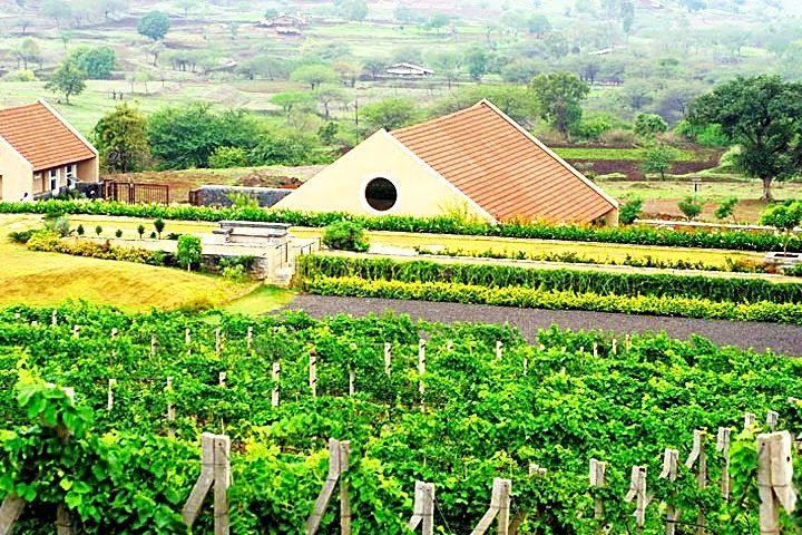Grover Zampa Vineyards Nandi Hills,Grover Zampa Vineyards Nearby Places To  Visit,Things To Do in Grover Zampa Vineyards
