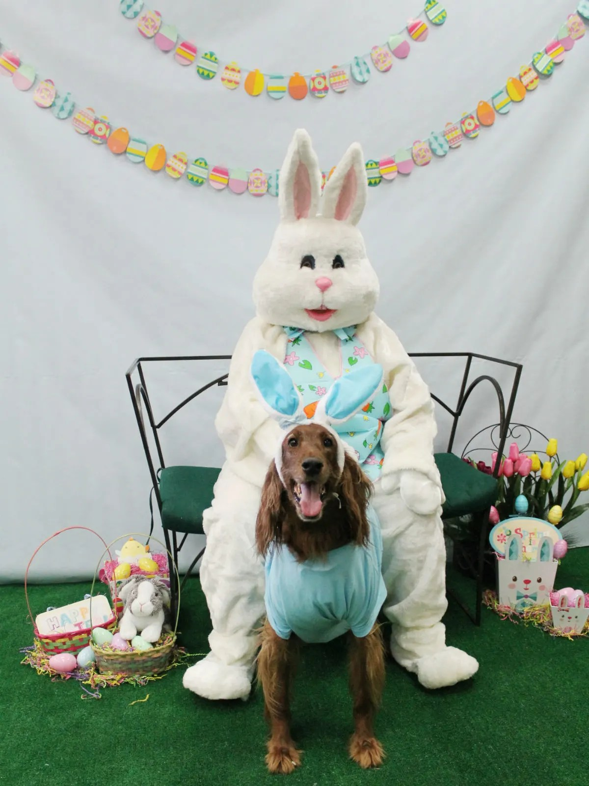Rover Oaks Pet Resort presents Doggie with the Easter