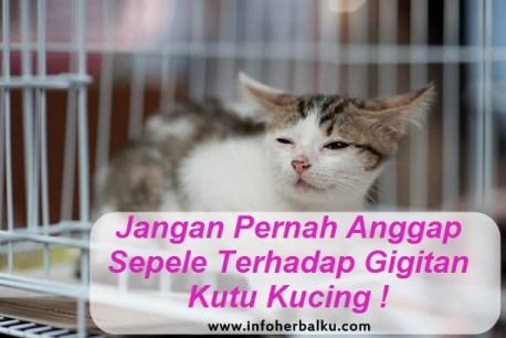 Obat Gatal-Gatal Bekas Kutu Kucing Di Apotik