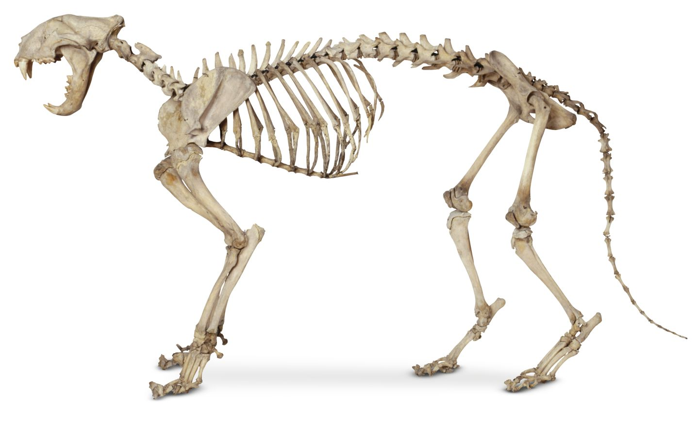 Images About Anatomy Mammal