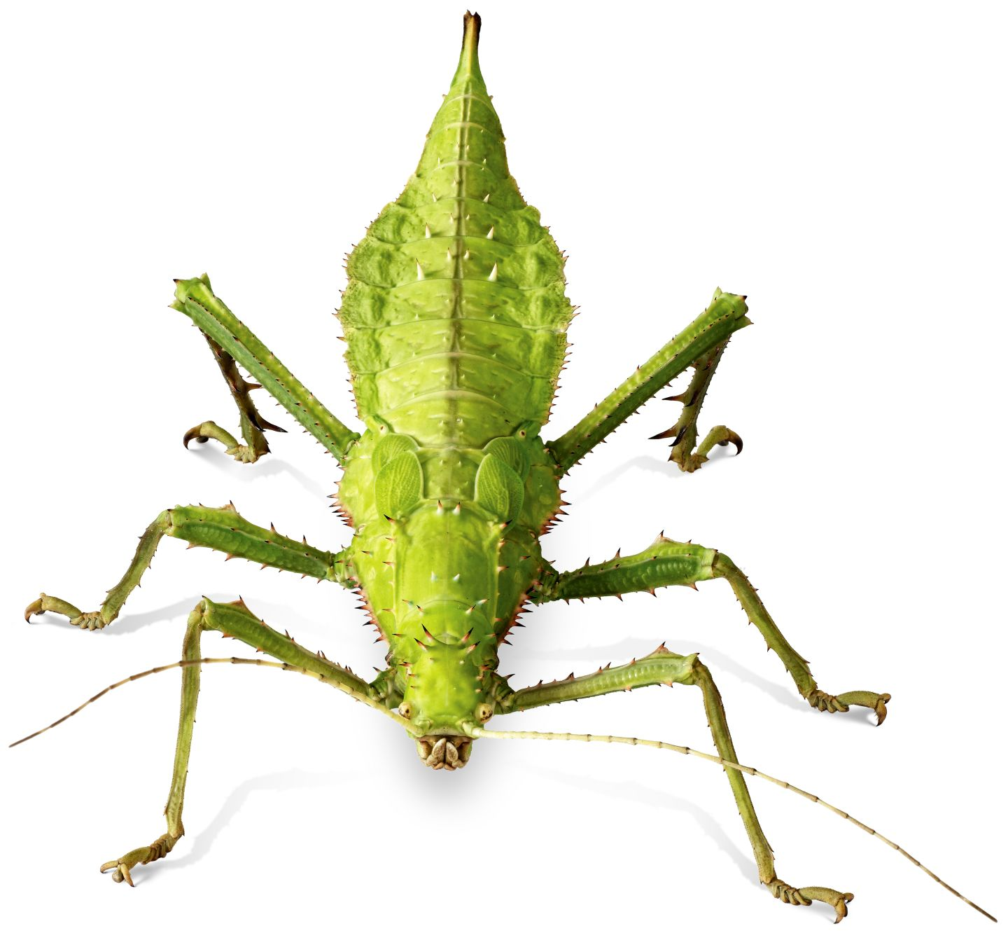 What Insects With 6 Legs Keyword Data