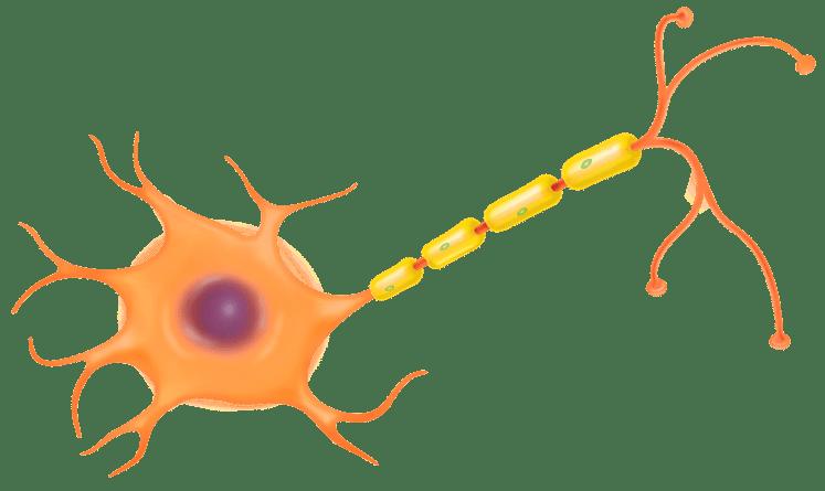 """""""اعرف"""" ما هى مكونات الخلية العصبية"""
