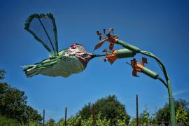 hummingbird_sonoma_med-pop_sm