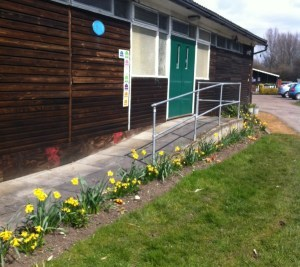 Daffodils outside the clubhouse