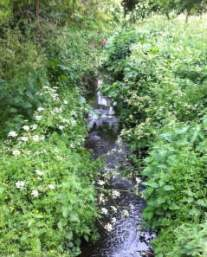 south norwood stream