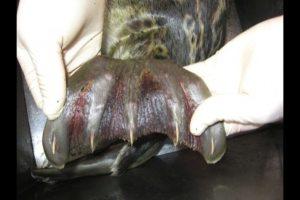 seal-flipper