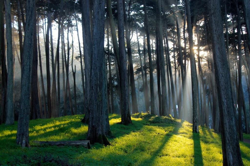 Presidio Forest SF9