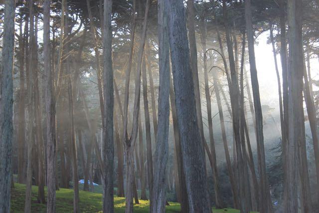 Presidio Forest SF7