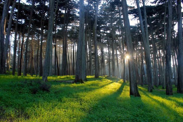 Presidio Forest SF4