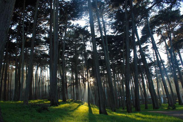 Presidio Forest SF3
