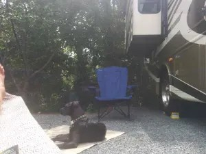 Hanging out next to the RV! The wooded area directly behind us.