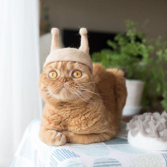 hipwee cat hat 8 5d53d11e96b04  700 Kucing kucing Lucu dengan Topi dari Rontokan Bulu bulunya