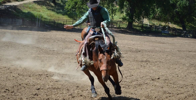 rodeo horse rider cowboy