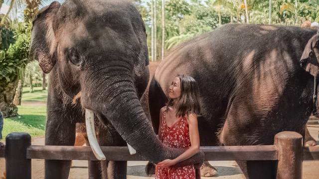 elephants bali