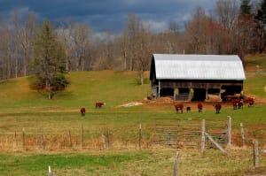 barn Glenville Cullowhee WCU cows field