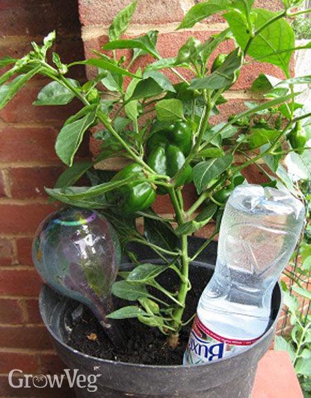 Water Garden Plants Near Me