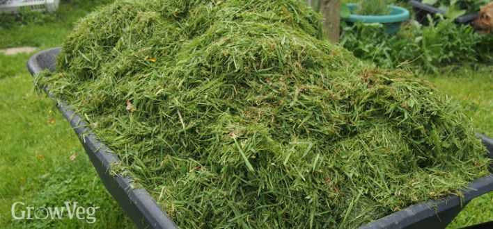 Grass clippings for use as vegetable garden mulch