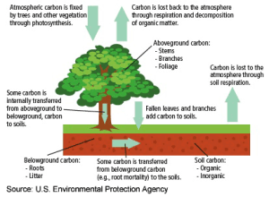 Reforestation: Impact on Climate | TEDEd