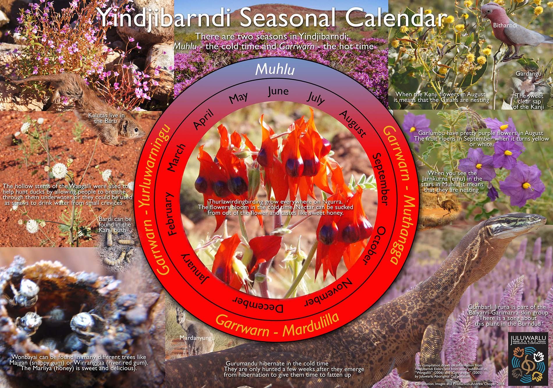 Yindjibarndi Seasonal Calendar image.