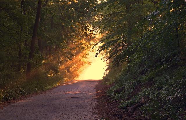 forest jharkhand