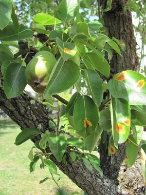 Baumkrankheiten Verhindern Oder Den Befallenen Baum Wieder