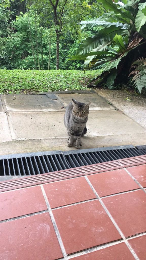 nus-cat-cafe-cat4