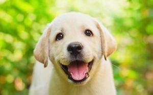 dog ears happy
