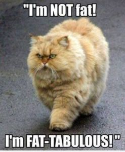 im not fat cat