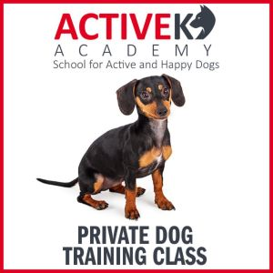active-k9-academy-private-dog-training-class