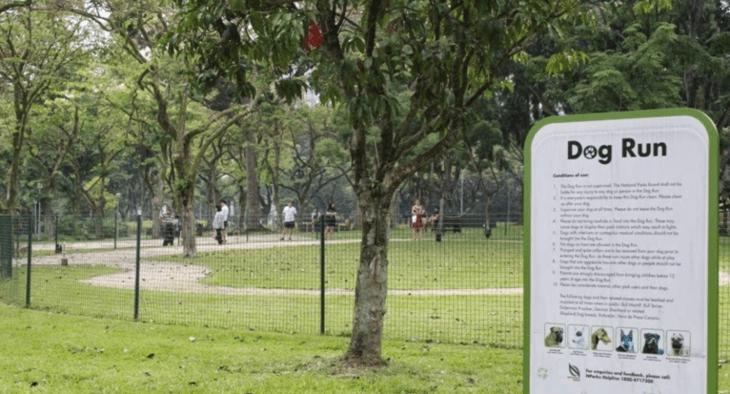 singapore dog run