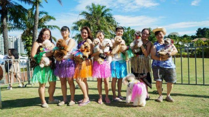 pets picnic theme