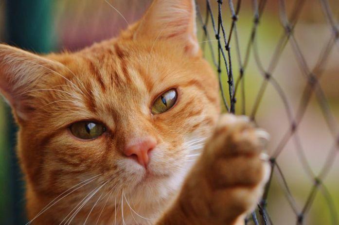 cat on net