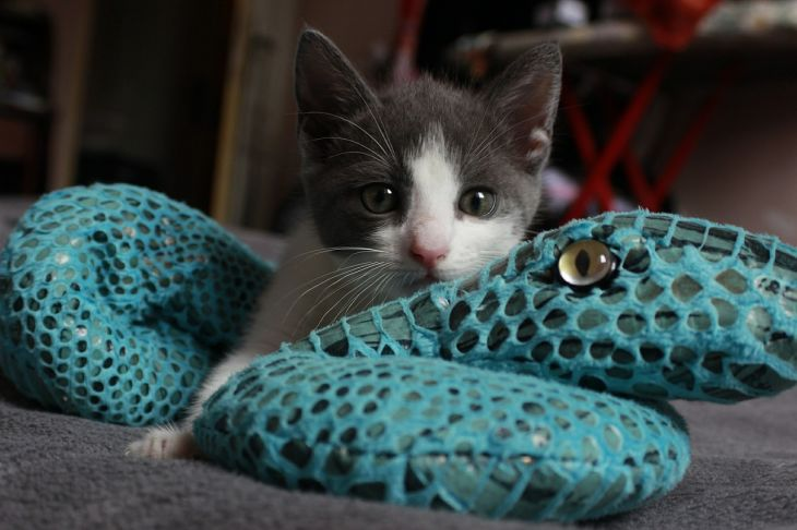 Types of cat toys