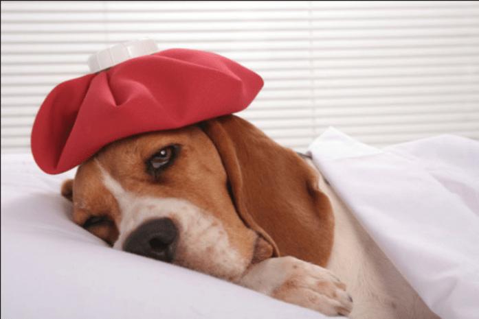 dog allergies treatments