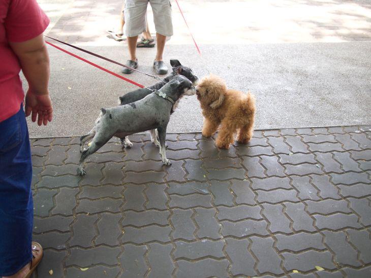 YCK Dogs Mingle