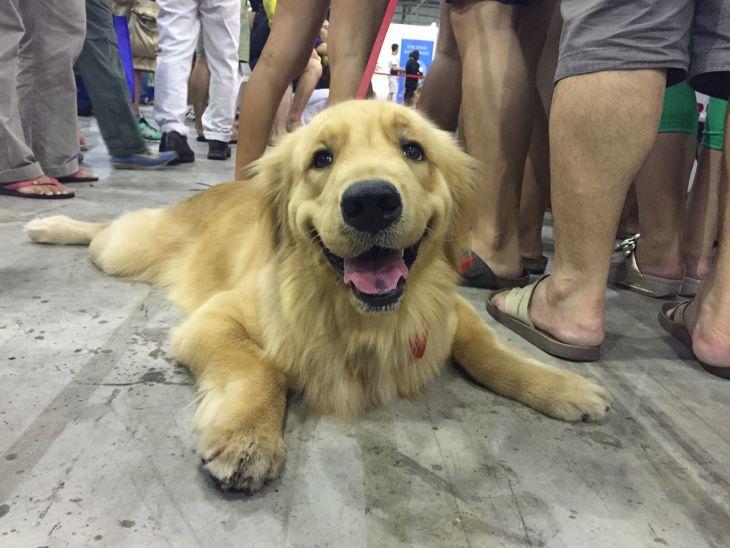 singapore-pet-expo-2015-414