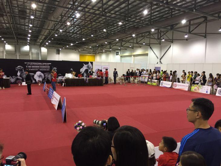singapore-pet-expo-2015-245
