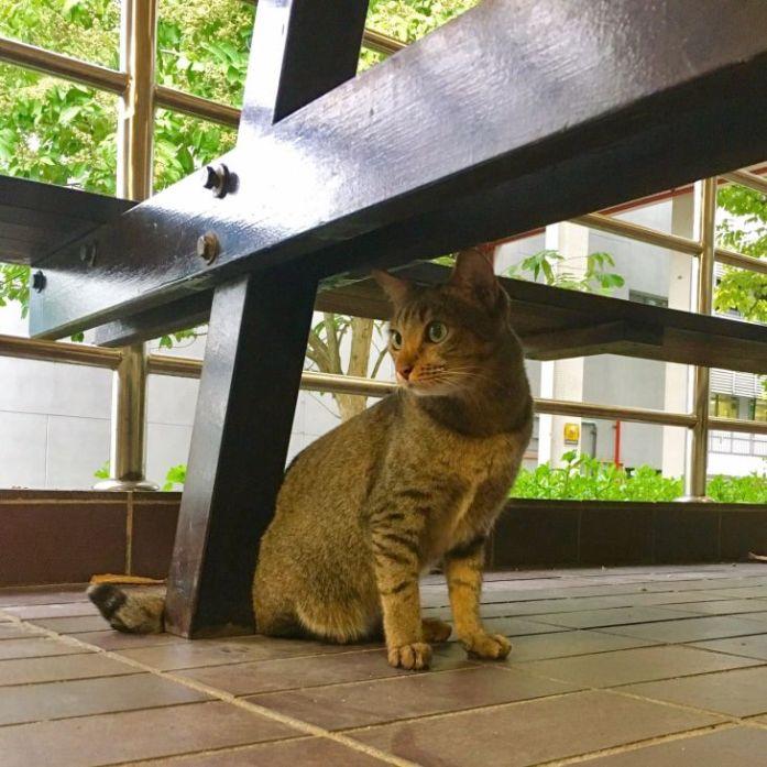 nus-cat-cafe-cat1