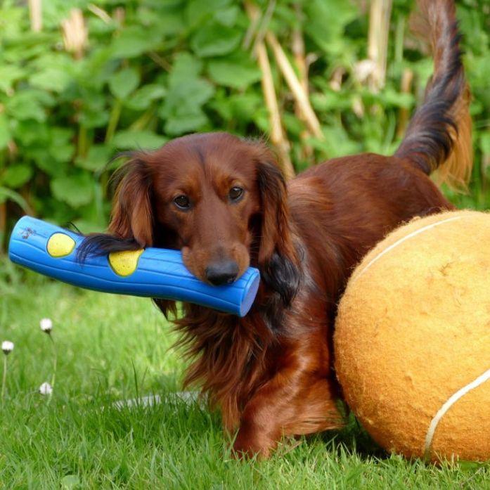 dachshund toy