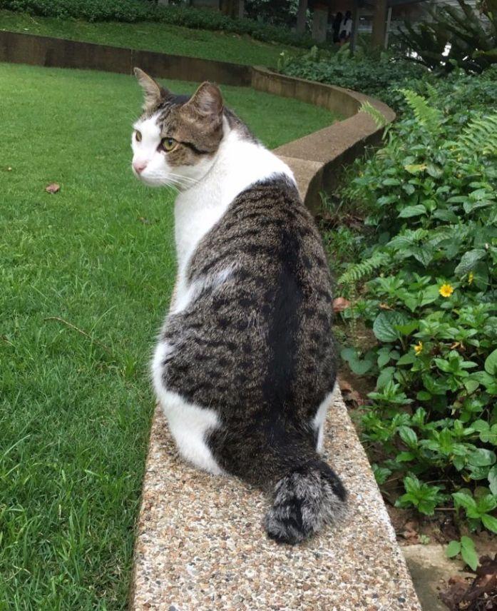 nus-cat-cafe-cat2