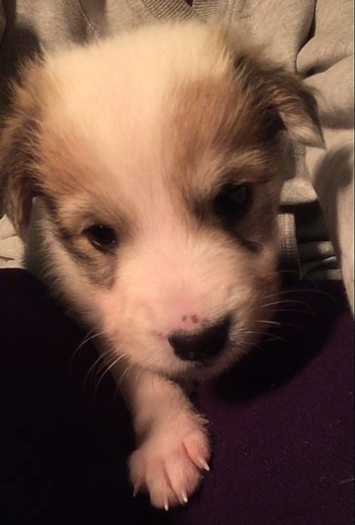newborn puppies 5