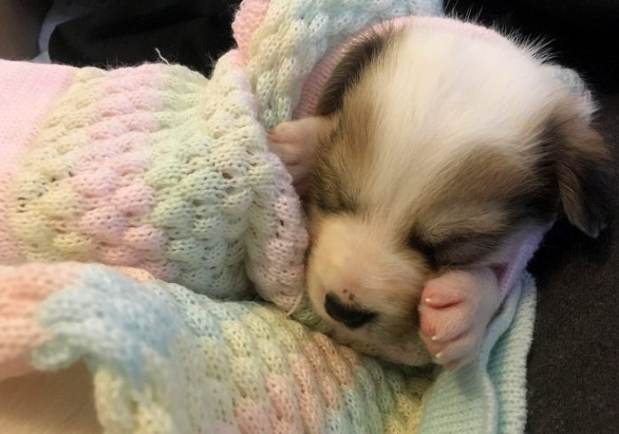 newborn puppies blanket