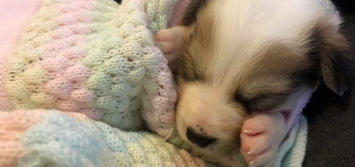 newborn puppies blanket