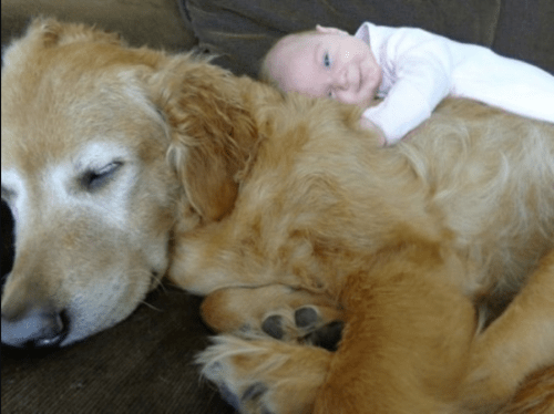 dogs are like humans look after children