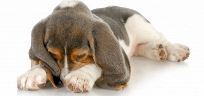 dog odours